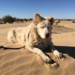 Imperial Sand Dunes/Algodones Sand Dunes