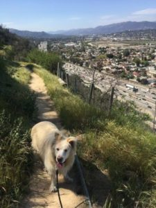 The 5 Freeway Hike, Elysian Park